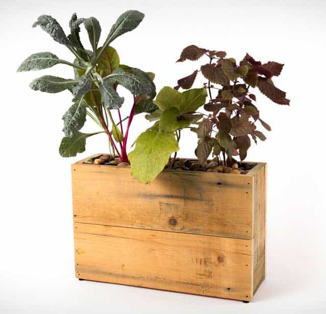 Modern Sprout hydroponic plugin planter