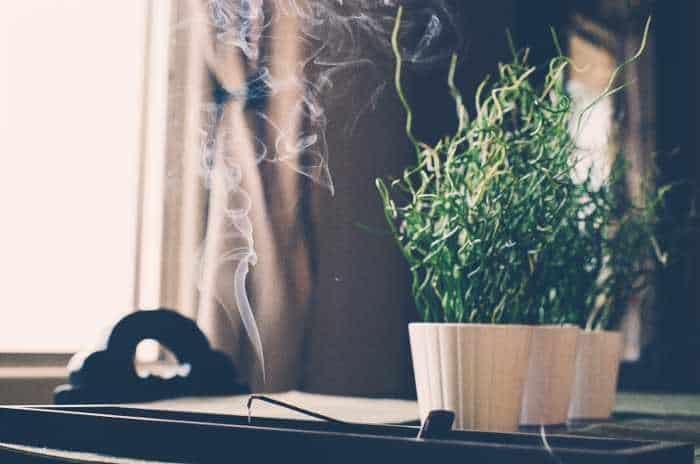 incense helps mice relax, studies show